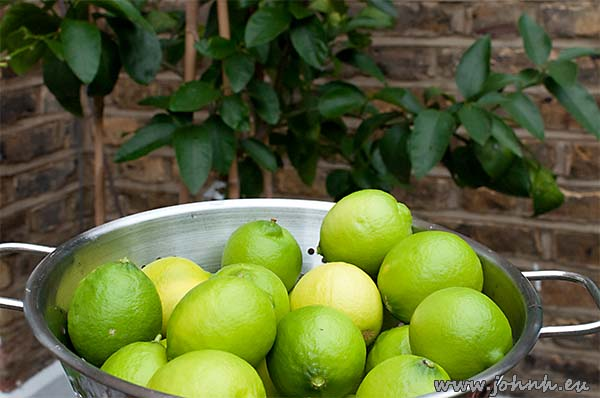 Limes harvested from my tree on my patio in West London
