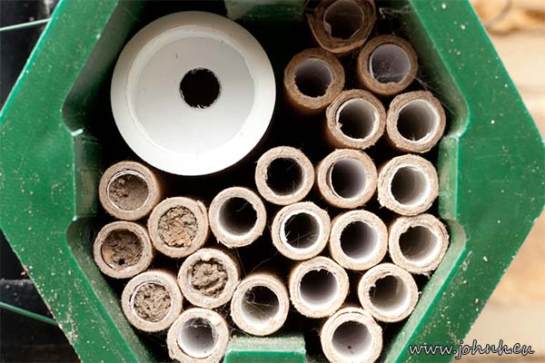 Mason Bees in their cocoons in my garden