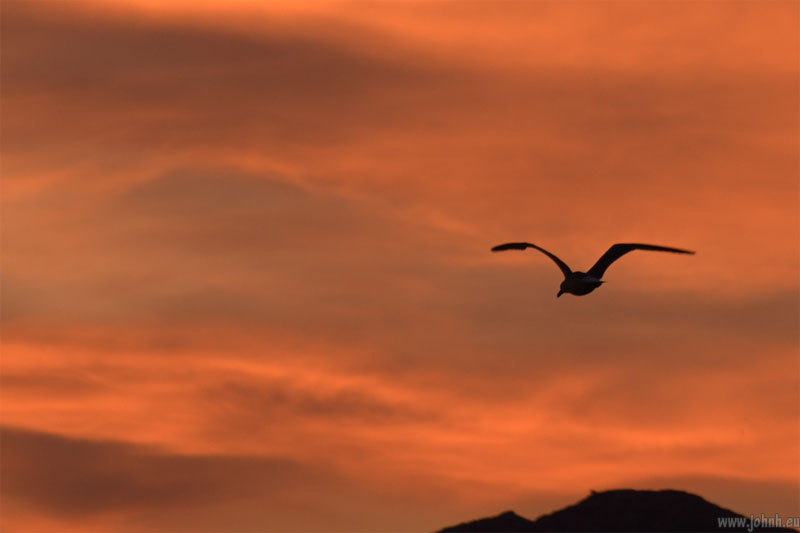Seagull at dawn over Marseille