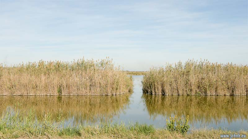 Reeds and lakes of the Camargue
