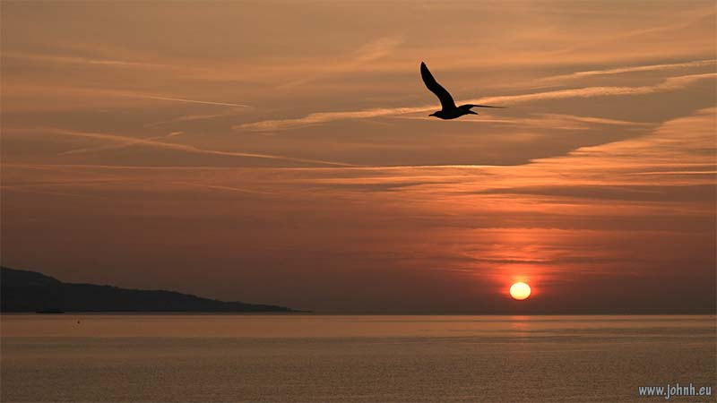 Seagull at dawn over the Ligurian Sea