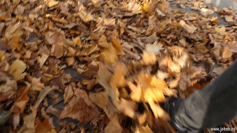 Walking through leaves