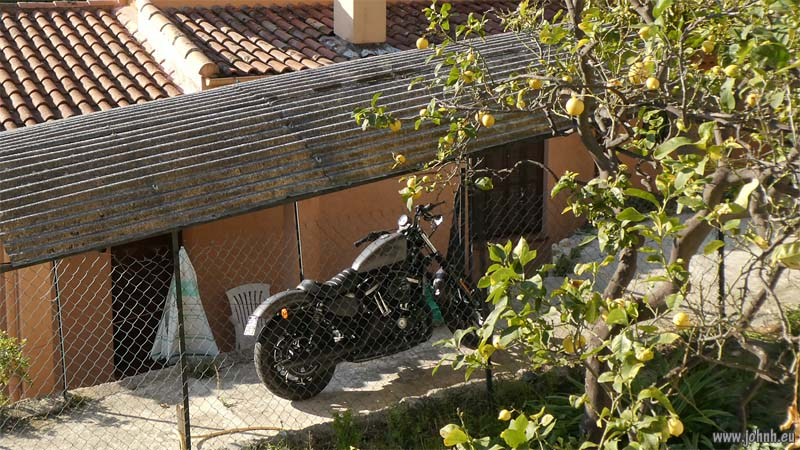Harley parked under a lemon tree in fruit