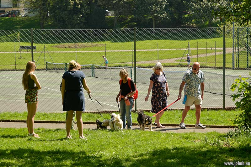 Dogs and dog walkers in Hove Park