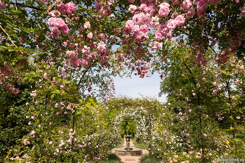 Rose garden at Nymans