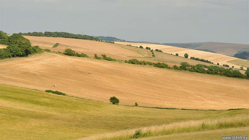 Golden Sussex Downs near Falmer