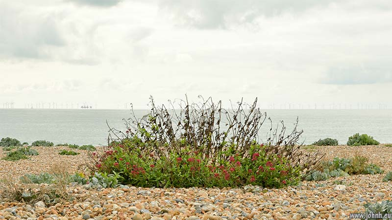 Shoreham Beach nature reserve - view towards Rampion Wind Farm