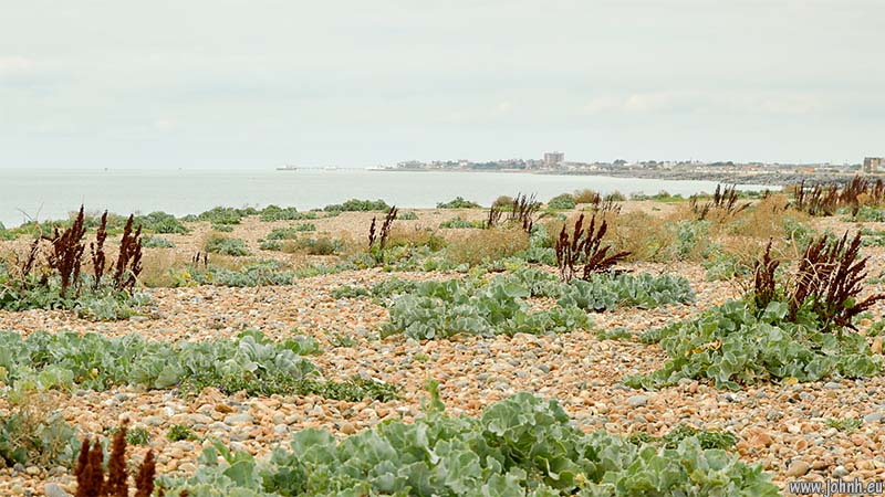 Shoreham Beach nature reserve - view towards Worthing