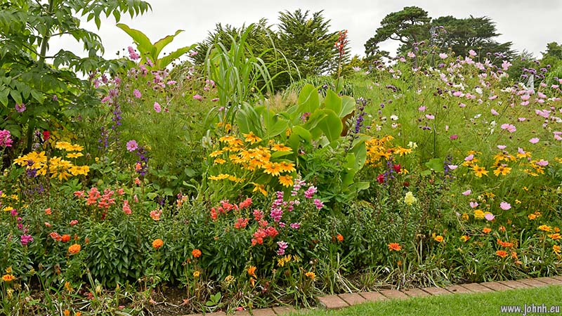 Flower border in Gyllyngdune Gardens, Falmouth