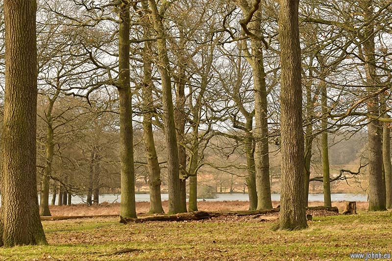 Trees and lake, Richmond Park