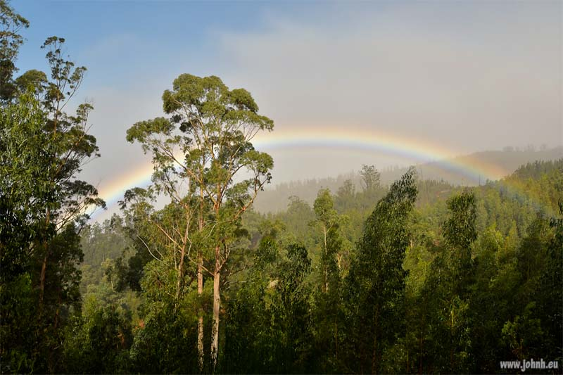 Cloud forest rainbow, Madeira