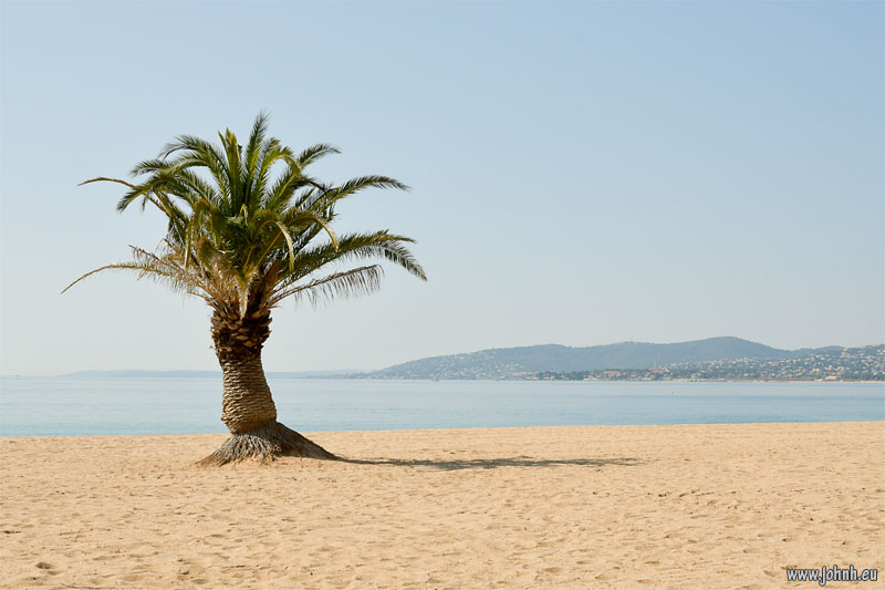 Palm tree on the neach at Fréjus