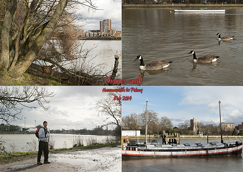My photos of the Thames path between Hammersmith and Putney