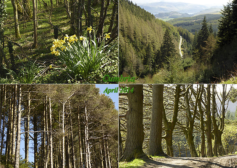 My photos of Whinlatter Mountain Forest in Cumbria