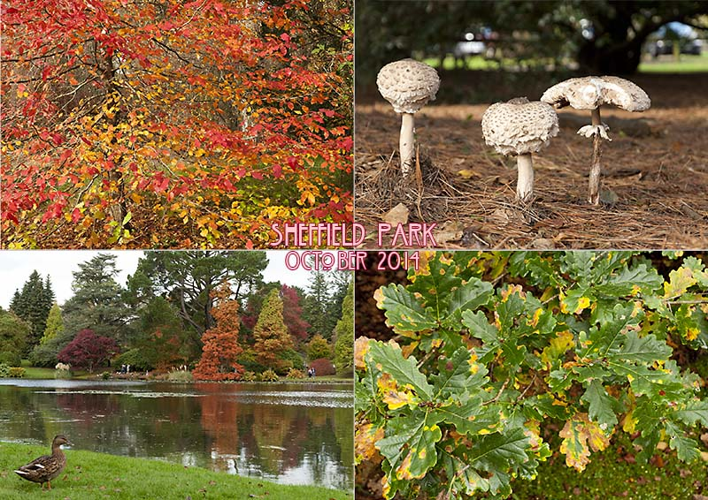 Postcard of my photos of Sheffield Park Gardens, Sussex, October 2014