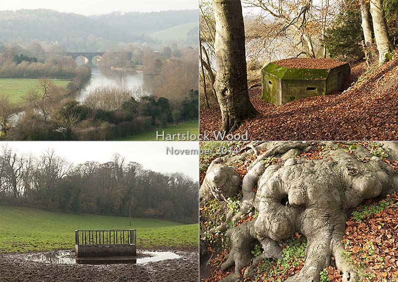 Postcard of my photos of Hartslock Wood near Pangbourne in the Thames Valley