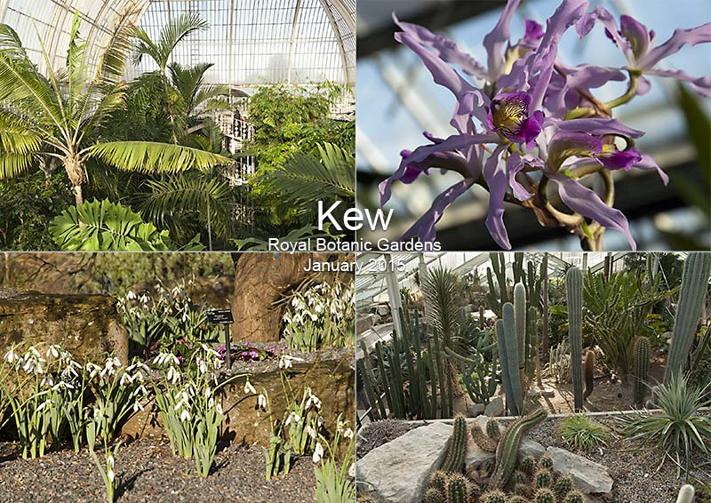 Photos of Kew Gardens in winter: palm house, snowdrops, orchids and cacti