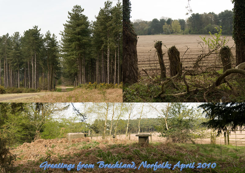 POstcard from Breckland