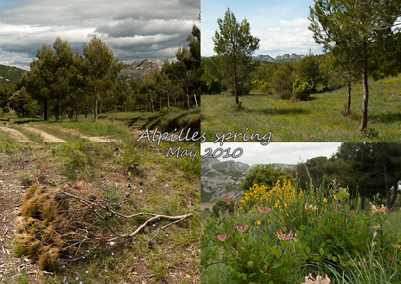Spring in the Alpilles