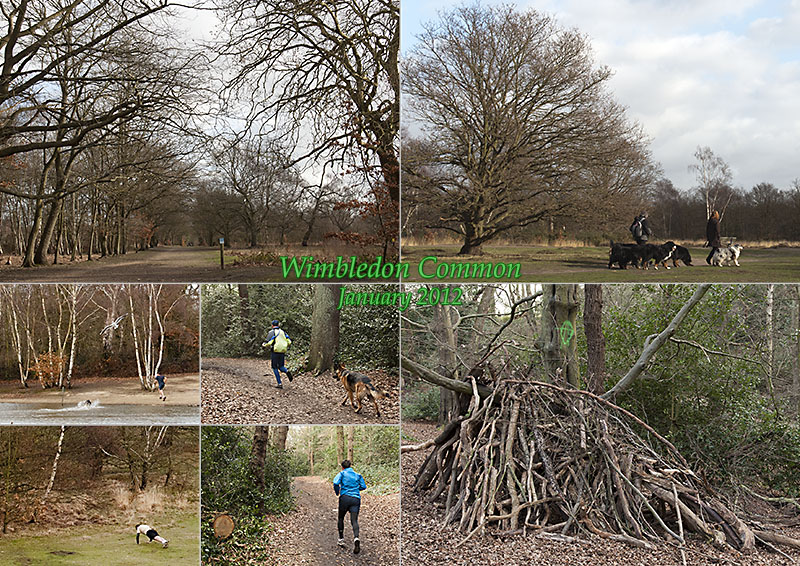 Postcard from Wimbledon Common, January 2012