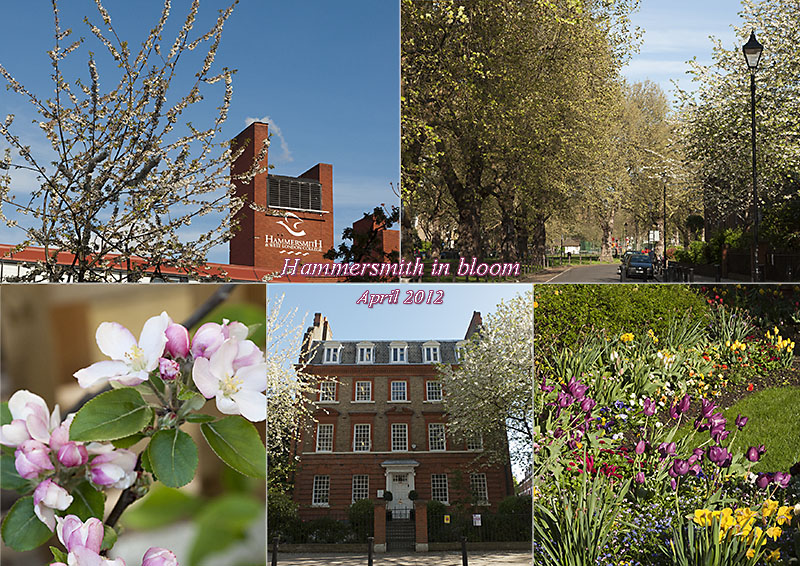 Hammersmith in bloom - April 2012