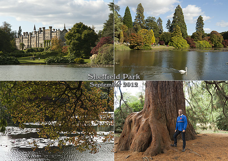 Shows lakes, trees and giant Sequoia at Sheffield Park, Sussex