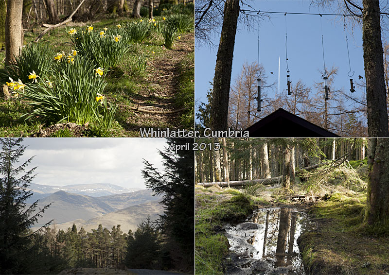 Hiking in Whinlatter Forest Park, Cumbria